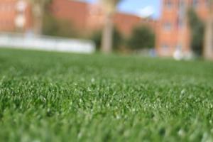 close up of turfgrass
