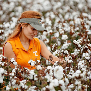 Researcher collecting data in cotton field