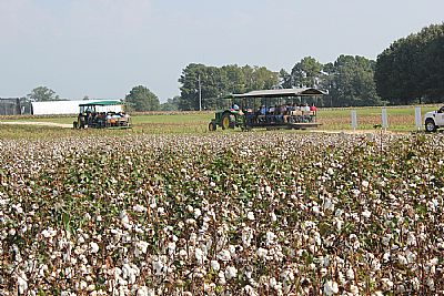 Cotton Tour Field Day picture