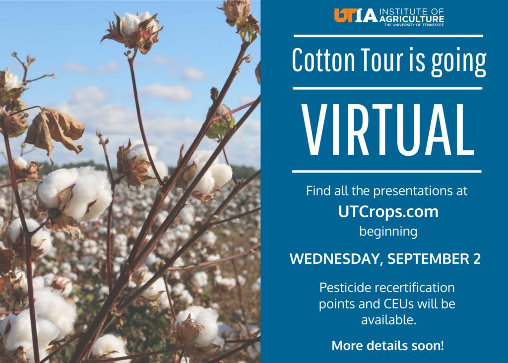 Announcement for 2020 Virtual Cotton Field Tour